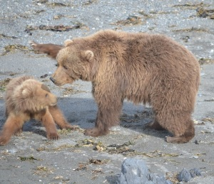 A mother bear and her cub (Photo credit: Beth Fields)